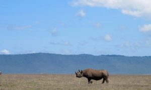 6 Tips to remember on a Tanzanian Safari